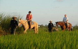 Horse Riding at Canggu,Bali Horse Riding,Bali Horse Riding