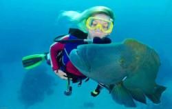 Snorkeling image, Bali Brio Cruise, Lembongan Transfer