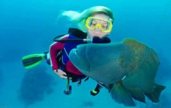 Snorkeling,Lembongan Transfer,Bali Brio Cruise