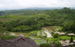 Bedugul and Taman Ayun Temple Tour, Bali Sightseeing, Bedugul Bali