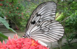 Bali Butterfly Park, Nature Park for Butterfly