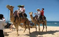 Nusa Dua Beach Camel Riding