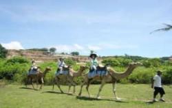 Camel Riding Bali,Bali Camel Safari,Bali Camel Safari