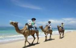 Bali Camel Safari, Camel Riding