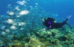 Bali diving nusa dua image, Bali Diving By Ena, Bali Diving