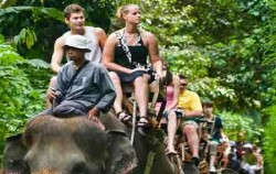 roads with elephants,Bali Elephant Riding,Bali Adventure Elephant Riding