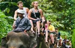 roads with elephants image, Bali Adventure Elephant Riding, Bali Elephant Riding