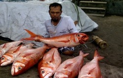 Fishing Charter Bali, Bali Fishing, Bottom Fishing