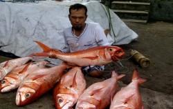 Bottom Fishing,Bali Fishing,Fishing Charter Bali