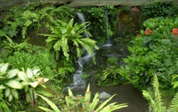Bali Butterfly Park, Breeding of butterfly