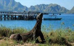 Hiking to See Komodo,Flores adventure,Open Trip 4D3N Flores to Lombok