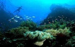 Komodo Diving,Komodo Adventure,Komodo Diving 5 Days Package