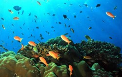 Nusa Penida Diving, Nusa Penida Packages, Nusa Penida Dive