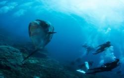 Nusa Penida Spot,Nusa Penida Packages,Nusa Penida Diving