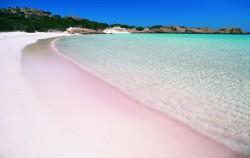 Pink Beach,Komodo Adventure,Flores and Komodo Adventure Tour 8D/7N