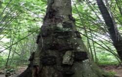 Tarra Tree The Baby Grave,Toraja Adventure,SOUTH SULAWESI 8D7N TOUR