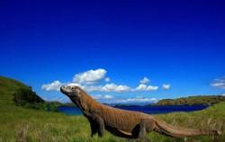 Komodo,Flores Adventure,Flores Adventure Homo Floresiensis And Komodo Dragon 4D 3N