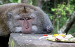 Ubud Monkey Forest,Bali Sightseeing,Ubud Village and Tegalalang Tour