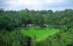 Ubud Village,Bali Sightseeing,Ubud Village and Tegalalang Tour