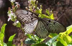 Bali Butterfly image, Bali Butterfly Park, Bali Butterfly Park