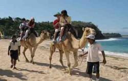 Bali Camel Safaris,Bali Camel Safari,Bali Camel Safari