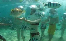 Bali Marine Walk, Lembongan Package, Walk under the sea