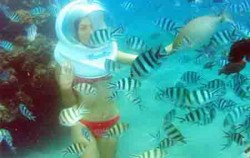 Playing with fishes image, Bali Ocean Walker, Benoa Marine Sport