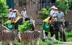 Elephant Bali Safari Park,Bali Safari Marine Park,Bali Safari and Marine Park