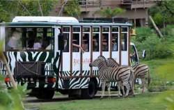 Bali Safari Explorer,Bali Zoo Park,Bali Safari Explorer