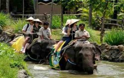 Bali Safari & Marine Park Package, Elephant Explorer