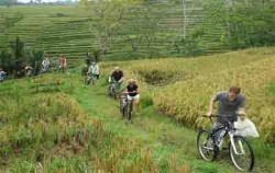 Bali Cycliing Tour,Bali Cycling,Bayan Cycling Tour