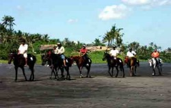 Horse riding in group,Bali Horse Riding,Horse Adventure Bali