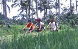 Bike Tour image, Jatiluwih & Kintamani Cycling, Bali Cycling