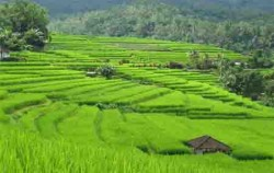 Jatiluwih Rice Terrace and Batukaru Temple, Bali Sightseeing, Jatiluwih Rice Terrace