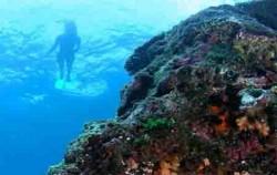 DIVERSE CRUISES,Bali Cruise,Lembongan Island Reef Cruise