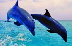 Dolphin Jump,Bali Sightseeing,Overnight and Dolphin Tours