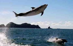 Dolphin Eco Encounter,Bali Sightseeing,Overnight and Dolphin Tours