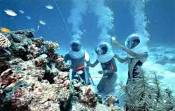 Coral View image, Sea Walker Adventure, Bali Sea Walker