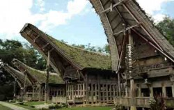 TANA TORAJA,Toraja Adventure,Tana Toraja Adventure 4 days 3 nights Tours