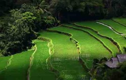 Tegalalang,Bali Sightseeing,Ubud Village and Tegalalang Tour