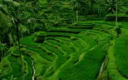 Panorama Tegalalang,Bali Sightseeing,Ubud Village and Tegalalang Tour