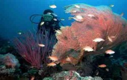 Yos Marine Diving Tours, Snorkeling