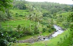 Ayung River,Bali Rafting,Mega Rafting Adventure