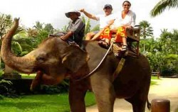 Safari Riding,Bali Elephant Riding,Bali Adventure Elephant Riding