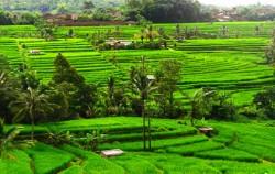 Jatiluwih,Bali Trekking,Bali Swaha Trekking Adventure