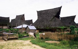Batak Karo Traditional Village