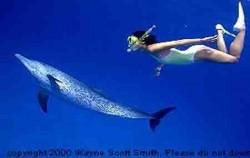 Dolphin,Bali Rafting,Bahama Adventure