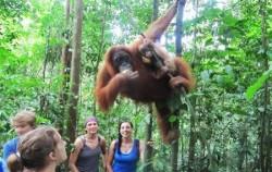 Bukit Lawang trekking,Sumatra Adventure,Exciting Medan 6 Days 5 Nights