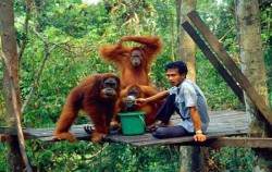 Orangutan Feeding Time,Sumatra Adventure,Overland Tour 8 Days 7 Nights