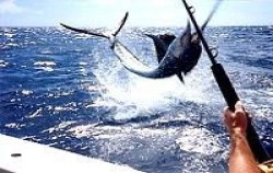 Marine Adventure Fishing, Bali Fishing, Trawling Fishing Bali
